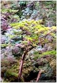 * 山風15度C吹拂 ~ 合歡溪 步道 (3):TAT-Blog-22-131.jpg