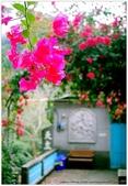* 千年沉睡裡;甦醒著 ~ 司馬庫斯 & 鎮西堡 (上篇) Part 3:TW-Blog-Pic-30-138.jpg