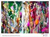 迷途在《阿勃勒》的美麗裡!Part 2:TAT-Blog-38-046B.jpg