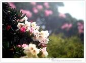 * 3422米高的幸福 ~ 合歡山 秋の遊 (3):TW-Blog-Pic-28(2)-18.jpg