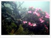 * 3422米高的幸福 ~ 合歡山 秋の遊 (3):TW-Blog-Pic-28(2)-15.jpg