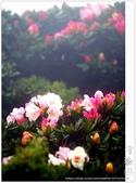 * 3422米高的幸福 ~ 合歡山 秋の遊 (3):TW-Blog-Pic-28(2)-19.jpg
