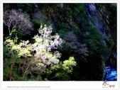 太魯閣 ~ 步道冬遊 2014 ~ part 6:TAT-Blog-35-166.jpg
