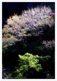 太魯閣 ~ 步道冬遊 2014 ~ part 6:TAT-Blog-35-167.jpg