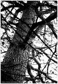 * 千年沉睡裡;甦醒著 ~ 司馬庫斯 & 鎮西堡 (上篇):TW-Blog-Pic-30-05.jpg