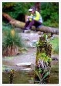 * 美景 總在千山萬水之後 ~ 水漾森林 (4):TW-Blog-23(2)-50.jpg