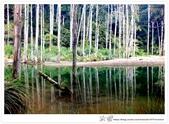 * 美景 總在千山萬水之後 ~ 水漾森林 (3):TW-Blog-23(2)-21.jpg