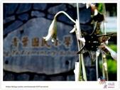迷途在《阿勃勒》的美麗裡!Part 2:TAT-Blog-38-065A.jpg