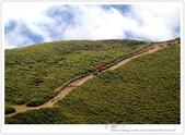* 3422米高的幸福 ~ 合歡山 秋の遊 (5):TW-Blog-Pic-28(2)-141.jpg