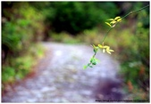 * 山風15度C吹拂 ~ 合歡溪 步道 (3):TAT-Blog-22-142.jpg