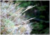 * 山風15度C吹拂 ~ 合歡溪 步道 (3):TAT-Blog-22-138.jpg