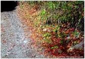 * 山風15度C吹拂 ~ 合歡溪 步道 (1):TAT-Blog-22-61.jpg