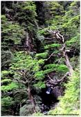* 山風15度C吹拂 ~ 合歡溪 步道 (2):TAT-Blog-22-117.jpg