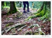 * 美景 總在千山萬水之後 ~ 水漾森林 (2):