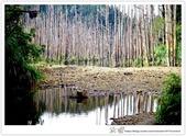 * 美景 總在千山萬水之後 ~ 水漾森林 (3):TW-Blog-23(2)-08.jpg