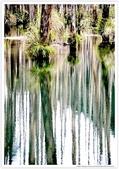 * 美景 總在千山萬水之後 ~ 水漾森林 (4):TW-Blog-23(2)-62.jpg