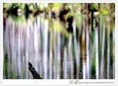 * 美景 總在千山萬水之後 ~ 水漾森林 (3):TW-Blog-23(2)-45.jpg