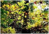 * 千年沉睡裡;甦醒著 ~ 司馬庫斯 & 鎮西堡 (上篇):TW-Blog-Pic-30-09.jpg