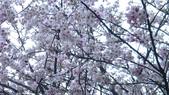 山嵐班2:橫嶺古道 (53).JPG