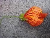 山嵐班2:燈籠花.JPG