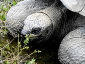 ivy生物拍拍國:亞達伯拉象龜