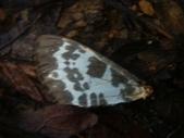 山嵐班2:蝴蝶