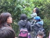 山嵐班:9903 桑樹.JPG