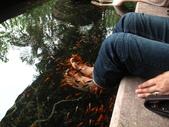 20120810宜蘭慢活:IMG_7248溫泉魚.JPG