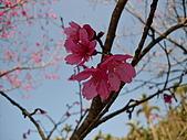 2010/1/17梅嶺&曾文水庫:IMG_8637.JPG