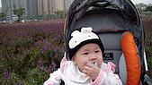 2009/11/19凹仔底森林公園半日遊:IMG_8251.JPG