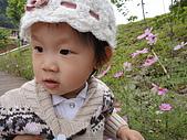 2010/04/26(春末夏初)油桐花&水沙連:米彌&大波斯菊