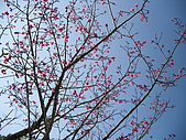 2010/1/17梅嶺&曾文水庫:IMG_8639.JPG
