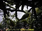 2007/9/22宜莘家火山岩烤肉趴:IMGP0070.jpg