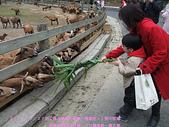 2009/1/27初二我在通霄天氣晴~飛牛牧場:DSCF2259 拷貝.jpg