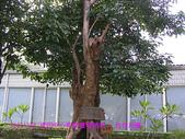 2007/12/08資訊中心青青農場烤肉:IMGP0055 拷貝.jpg