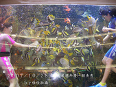 2007/10/28高島屋週年慶~餵魚秀:IMGP0202 拷貝.jpg