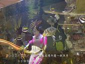 2007/10/28高島屋週年慶~餵魚秀:IMGP0198 拷貝.jpg