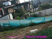 2009/11/7陽明山竹子湖吃飯踏青:DSCF7262.jpg