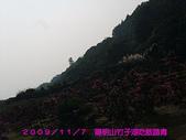 2009/11/7陽明山竹子湖吃飯踏青:DSCF7271.jpg