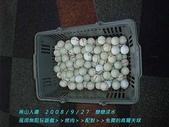 南山人壽2008/9/27戀戀淡水:200顆要打到何時?