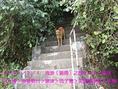 2008/2/1-2/3流浪之旅高雄&佳里:好多狗追過來