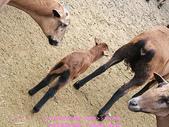 2009/1/27初二我在通霄天氣晴~飛牛牧場:DSCF2258 拷貝.jpg