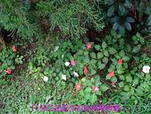 2008/6/28-新相機測試隨便拍:DSCF0102.jpg