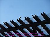 2010/8/20★桃園縣★龜山鄉/大溪☺:DSCF0246 拷貝.jpg
