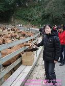 2009/1/27初二我在通霄天氣晴~飛牛牧場:DSCF2257 拷貝.jpg