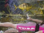 2007/10/28高島屋週年慶~餵魚秀:IMGP0218 拷貝.jpg
