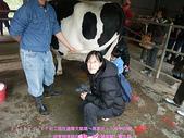 2009/1/27初二我在通霄天氣晴~飛牛牧場:DSCF2272 拷貝.jpg