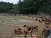 2009/1/27初二我在通霄天氣晴~飛牛牧場:DSCF2256 拷貝.jpg