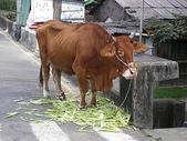 2007/1/13~1/14嘉義下鄉之旅:IMGP0182.jpg