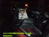 2009/4/29國人都叫好錄影&台大校園:睡著的貓